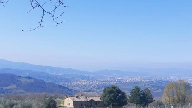 vigneto_sangiovese_panorama